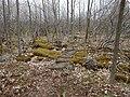 """Bruce Trail"" (34779574621).jpg"