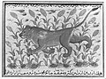 """ A Lion"", Folio from a Dispersed Nuzhatnama-i 'Ala'i of Shahmardan ibn Abi'l Khayr MET 18892.jpg"