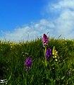 (((گلهای بهاری مراغه ))) - panoramio.jpg