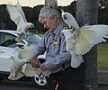 (1)Man feeding birds-3.jpg