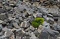 Χρώμα στην πέτρα.jpg
