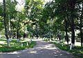 Алея верхівнянського парку.jpg