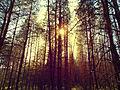 Байрачные леса 2.jpg