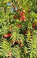 Ботанічний сад Дніпро рослини.jpg