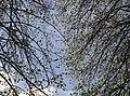 Весна у Стрийському парку.jpg