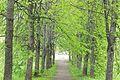 Вечаша-парк.jpg