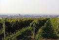 Виногради.jpg