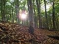 В лесу,Крым 10.10.11 - panoramio.jpg