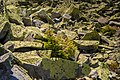 Горганське каміння.jpg
