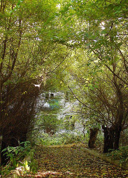 File:Затюменский парк 2008 - panoramio.jpg