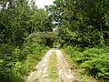 Лесная дорожка meža ceļš - panoramio (9).jpg