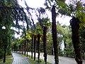 Пальмовая аллея парка.jpg