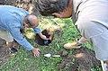 Припремање земљишта за формирање благотинске неолитске пећи 04.jpg