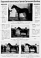 Реклама гавриловского конного завода Григория Григорьевича Елисеева 2.jpg
