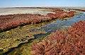 Солеросы в устье реки Самароды - притока озера Эльтон.jpg