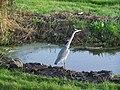 Стандартная для этой местности птица - panoramio.jpg