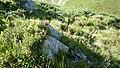Старопланинска флора - panoramio.jpg