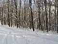 Украина, Киев - Голосеевский лес 168.jpg