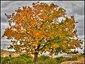 دیدنیهای پاییز مراغه - panoramio (11).jpg