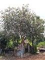 ചാവക്കാട് താലൂക്ക് 1z .jpg