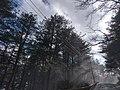 台8雪景.jpg