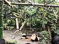 大熊猫照片.jpg