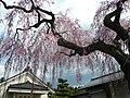 妙関寺 - panoramio.jpg
