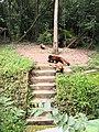 小熊猫照片照片.jpg