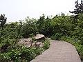 山路 - panoramio (13).jpg
