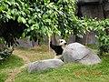 海洋公园 熊猫馆 - panoramio.jpg