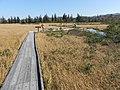 秋の木道 - panoramio.jpg