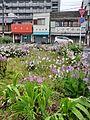 花のある空地 by takeokahp - panoramio.jpg