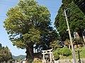 鉾納宮ケヤキ - panoramio.jpg