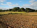 0096jfLandscapes Sunsets Fields Maronquillo San Rafael Bulacanfvf 14.JPG