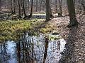 05-04-03-plagefenn-by-RalfR-31.jpg