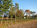 0581jfLandscapes Mabalas Diliman Salapungan Paddy fields San Rafael Bulacan Roadsfvf 04.JPG