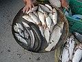 06586jfCandaba, Pampanga Market Fishes Foods Landmarksfvf 04.jpg