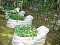 087. Шуваловское кладбище. Воинская площадка. Братская могила советских воинов.jpg