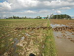 09426jfRoads fields Domesticated ducks Bahay Pare Candaba Pampangafvf 23.JPG