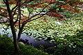 140614 Yagyu Iris Garden Nara Japan06s3.jpg