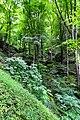 170710-5 Buchenhochwald - eine Besonderheit.jpg
