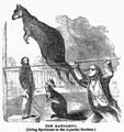 1862 kangaroo Aquarial and ZoologicalGardens Boston Ballous.png