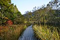 191102 Hakone Botanical Garden of Wetlands Hakone Japan09.JPG