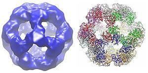 Dihydrolipoyl transacetylase - Image: 1B5S crop