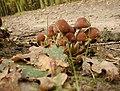 20021102 Neer Mussenberg paddenstoelen 01 (9929177423).jpg