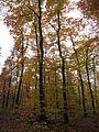 20121112Buchenwald St Leon5.jpg