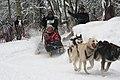 2012 Iditarod (6804403924).jpg