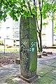 2019-06-18-bonn-honnefer-strasse-19-la-fontaine-stele-der-fuchs-und-der-rabe-01.jpg