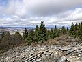 2019-10-27 12 02 11 View north-northwest from the Whispering Spruce Trail just southwest of Spruce Knob in Pendleton County, West Virginia.jpg