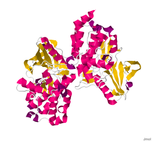 Myosin light-chain kinase - Image: 2X4F.pdb